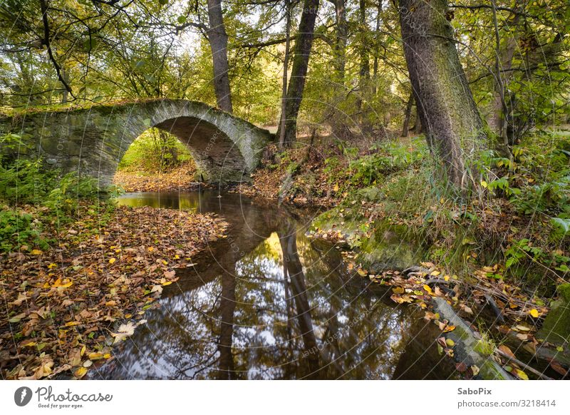 old stone bridge Trip Adventure Hiking Environment Nature Landscape Plant Elements Earth Water Autumn Beautiful weather Tree River bank Brook Deserted Stone Old