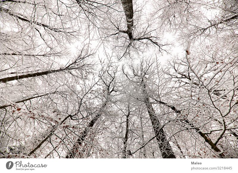 Snow-covered tree tops in the forest Frost Nature Cold Snowfall Forest Seasons Sky Weather White Winter Beautiful Landscape Natural Tree Ice Exterior shot