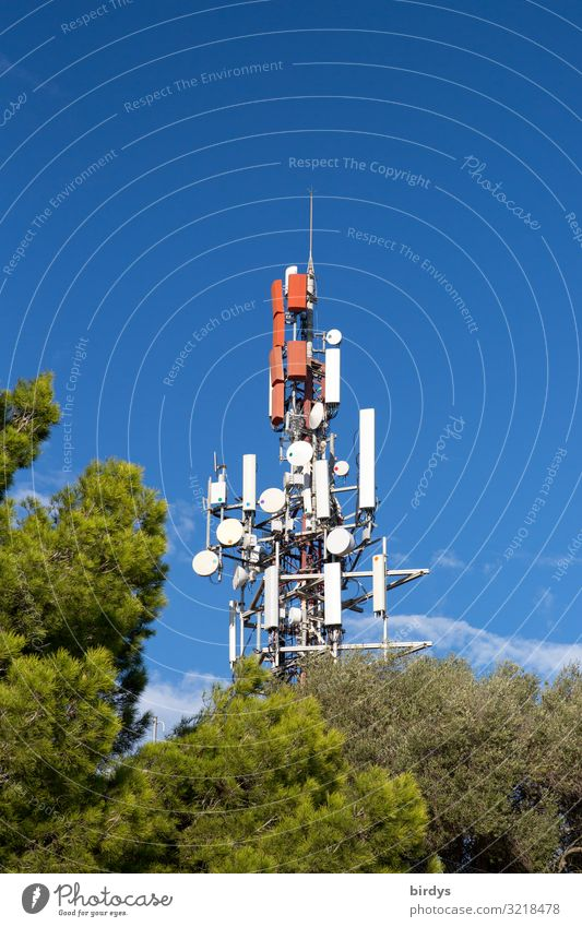 Mobile radio beam tree Telecommunications Mobile communications Landscape Cloudless sky Summer Beautiful weather Tree Illuminate Authentic Gigantic Tall Blue