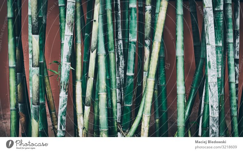 Bamboo stalks against wall, oriental background. Garden Nature Plant Grass Wild plant Forest Dark Green Relaxation Experience Peace Serene Nostalgia Asia Stalk