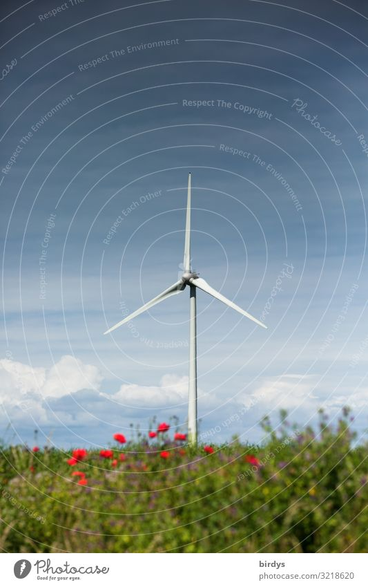 wind power Energy industry Renewable energy Wind energy plant Nature Landscape Sky Clouds Summer Climate change Flower Bushes Rotate Authentic Tall Positive