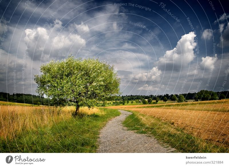 Sky Nature Blue Green Summer Tree Landscape Clouds Far-off places Yellow Meadow Lanes & trails Freedom Brown Contentment Field