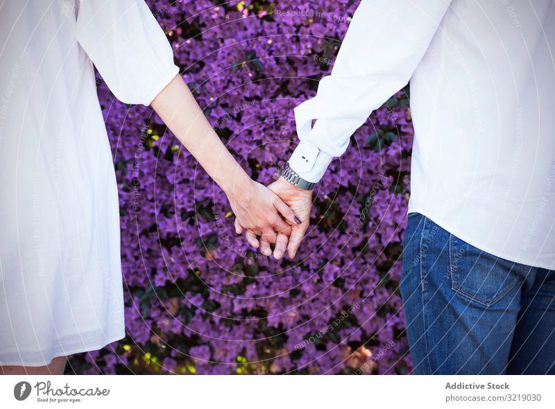 Crop couple holding hands near blooming bush flower park spring love violet man woman together romantic date plant flora blossom shrub tender garden season