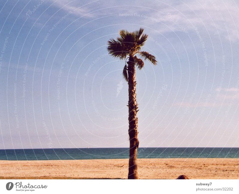Sun Ocean Summer Beach Vacation & Travel Coast Europe Spain Palm tree Barcelona Mediterranean sea Bathing place