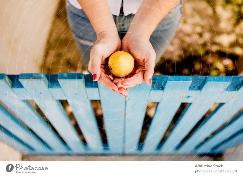 Female holding fruit in hands woman apple orchard summer garden fence low wooden female fresh refreshment palm healthy vitamin nutrition food diet juicy collect