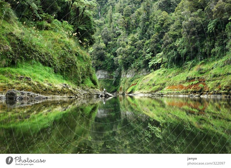 reflection Nature Landscape Water Virgin forest Lakeside Calm Reflection Colour photo Exterior shot Deserted Day