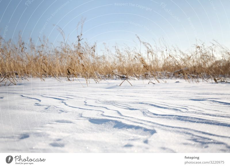 fresh snow Winter Snow Nature Landscape Wind Plant Grass Cold White Snowdrift Snow layer Snowscape dunes Dune Frost Frozen Powder snow country Erosion