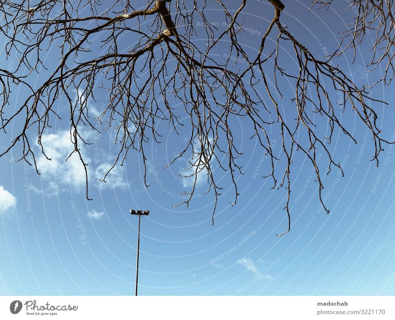 Sky Blue Tree Loneliness Winter Autumn Environment Together Above Elegant Uniqueness Branch Threat Street lighting Kitsch Relationship