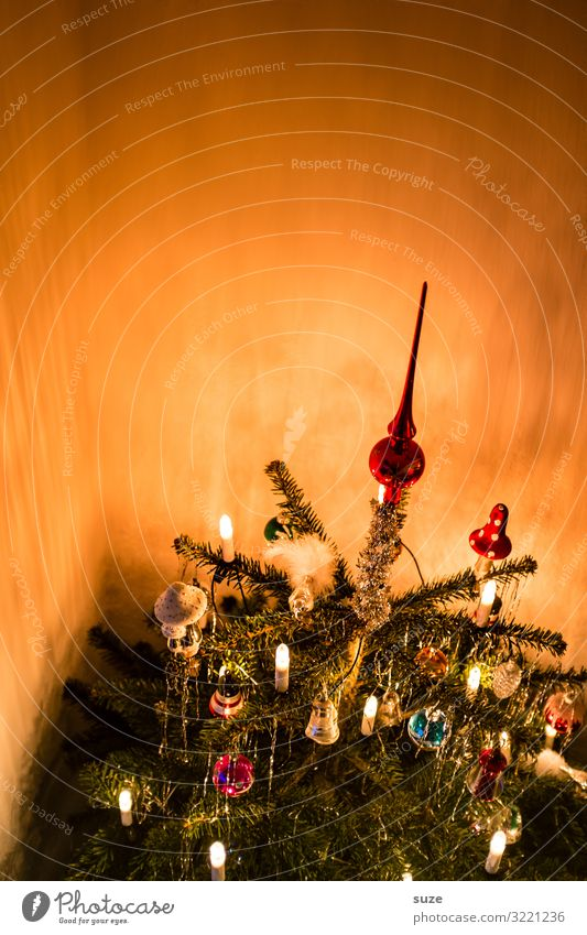 The tree stands Living or residing Decoration Feasts & Celebrations Christmas & Advent Winter Beautiful Moody Anticipation Together Expectation Nostalgia