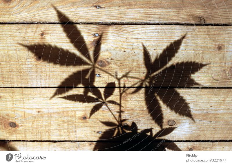 Shadow of a hemp plant on wooden planks - Canabis - nightshade plant - silhouette Marijuana Cannabis Hemp narcotic Grass thc Plant cbd Herbs and spices