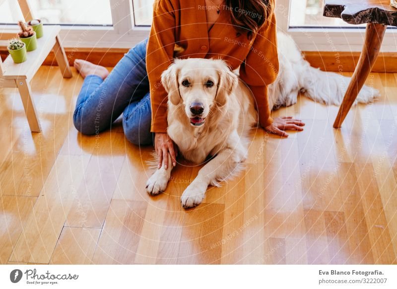 beautiful woman hugging her adorable golden retriever dog at home. love for animals concept. lifestyle indoors Woman Dog Home Golden Retriever Embrace Love