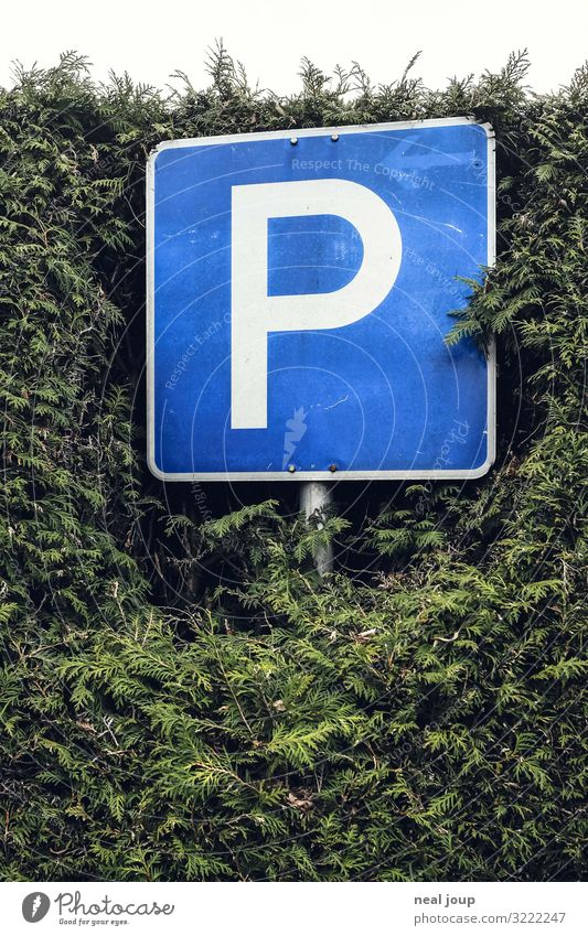 Long term parking Hedge Germany Transport Traffic infrastructure Road sign Parking lot Sign Characters Stand Wait Simple Nerdy Blue Green Watchfulness