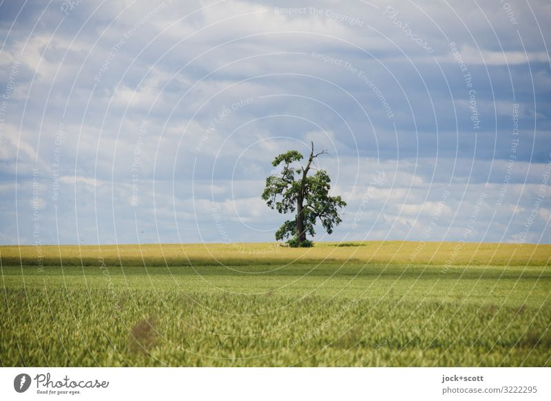 a tree with lots of views Agriculture Landscape Sky Clouds Wheatfield Growth Authentic Far-off places Horizon Inspiration Experiencing nature Subdued colour