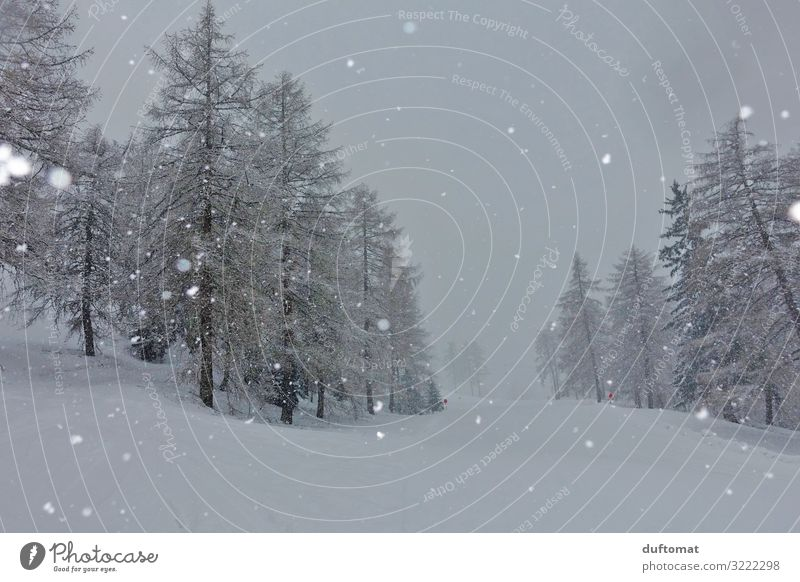 Nature Christmas & Advent White Landscape Tree Calm Forest Winter Mountain Cold Snow Snowfall Hiking Dream Fog Adventure