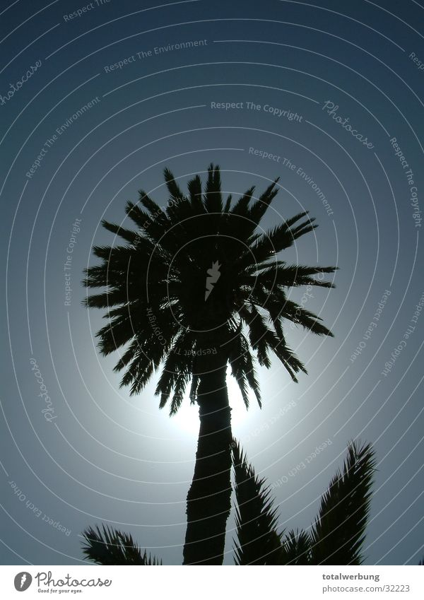 Palm tree against the light Back-light Tenerife Vacation & Travel Europe Sky