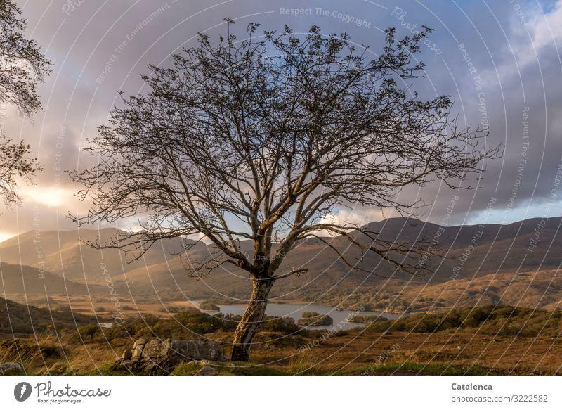 Blue Landscape Tree Clouds Mountain Black Autumn Environment Grass Lake Orange Brown Gray Moody Trip Rain