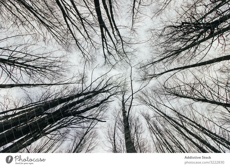 From below treetops in forest wood high nature amazing park beautiful growth branch flora scenic trunk countryside crown wild heaven outdoors horizontal