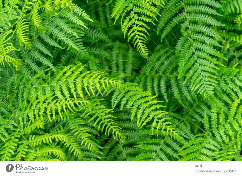 far plants closeup Nature Plant Leaf Above Juicy Green Fern Fern leaf wag full-frame image increased viewing angle Natural detail thriving Botany