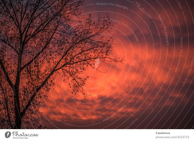 Sunset in December Environment Nature Plant Elements Sky Clouds Sunrise Winter Weather Tree Branch Poplar Garden Authentic Exceptional Gray Orange Red Black