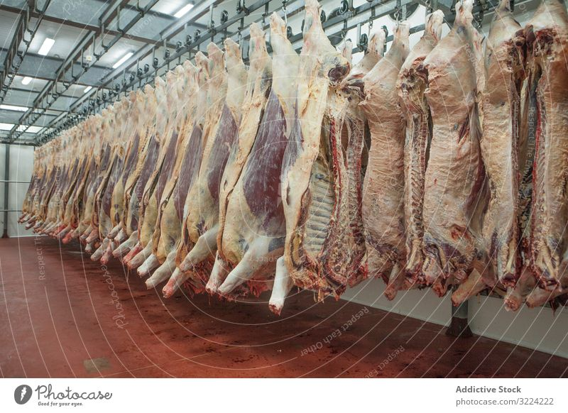 Suspended carcasses on slaughterhouse suspend meat fresh production food butchery raw industry hanging business occupation processing halves livestock