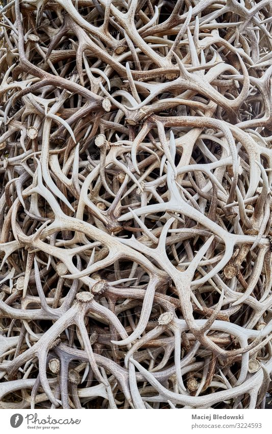 Pile of antlers, surreal conceptual background Hunting Animal Dead animal Sadness Concern Grief Death Fear Horror Dangerous Surrealism Trophy poaching Cruel