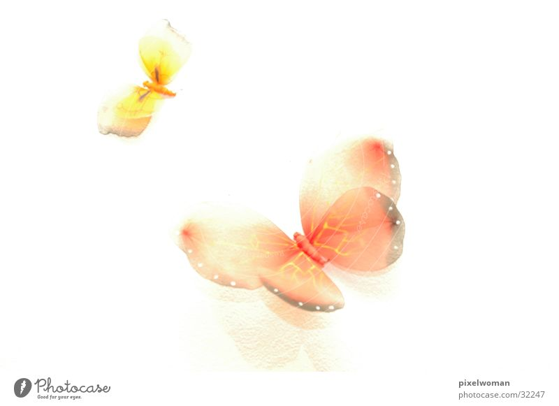 Red Animal Yellow Butterfly Photographic technology