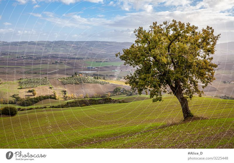 Tuscany Authentic landscape in autumn Vacation & Travel Tourism Nature Landscape Horizon Autumn Beautiful weather Tree Meadow Field Hill Rocca d'Orcia Italy