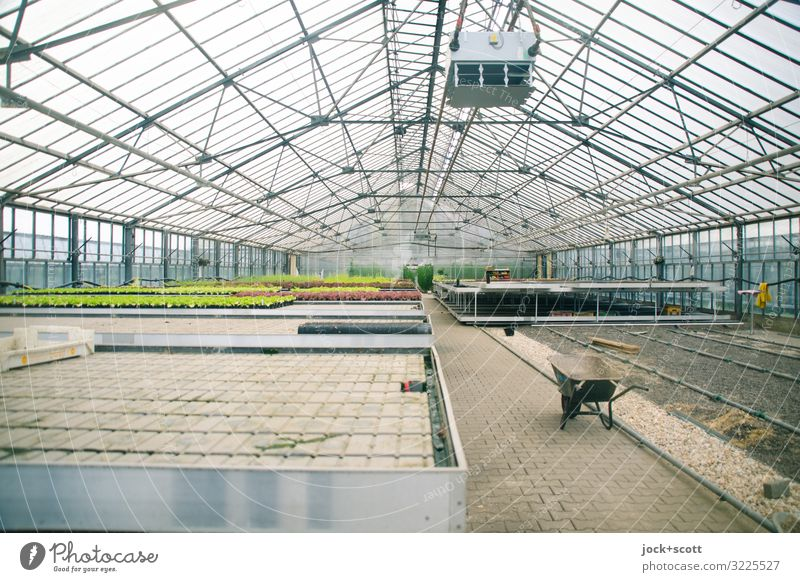 in the glass house you shouldn't throw stones! Horticulture Agricultural crop Greenhouse Construction Wheelbarrow Air conditioning Plant preservation Growth