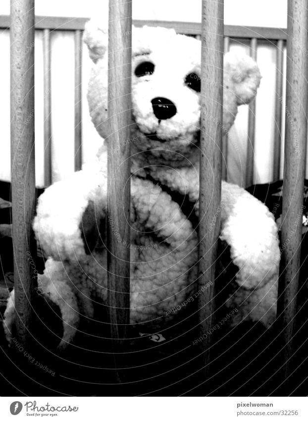 teddy bear Teddy bear Cuddly toy Animal Photographic technology Bear