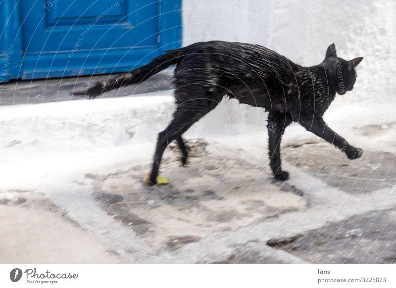 Cat Town Black Going Wet Greece