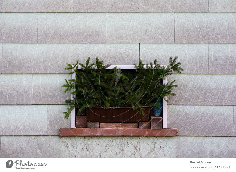 Advent Village House (Residential Structure) Facade Window Crazy Fir branch Christmas & Advent Sadness Strange Gloomy Decoration Window board Overgrown Green
