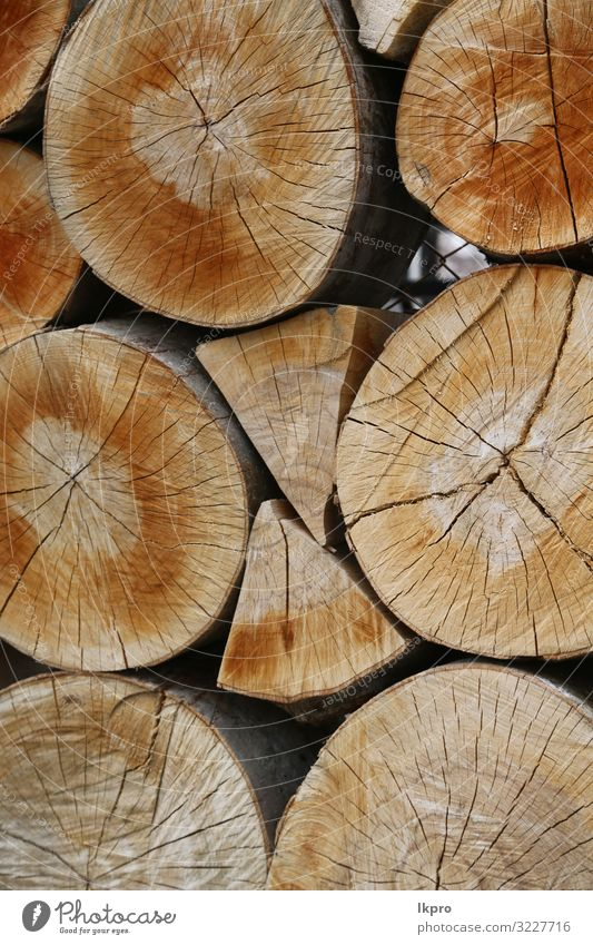 wood cut and background Work and employment Industry Saw Environment Nature Plant Tree Forest Ring Wood Natural Brown Energy Cut Log Consistency Timber trunk