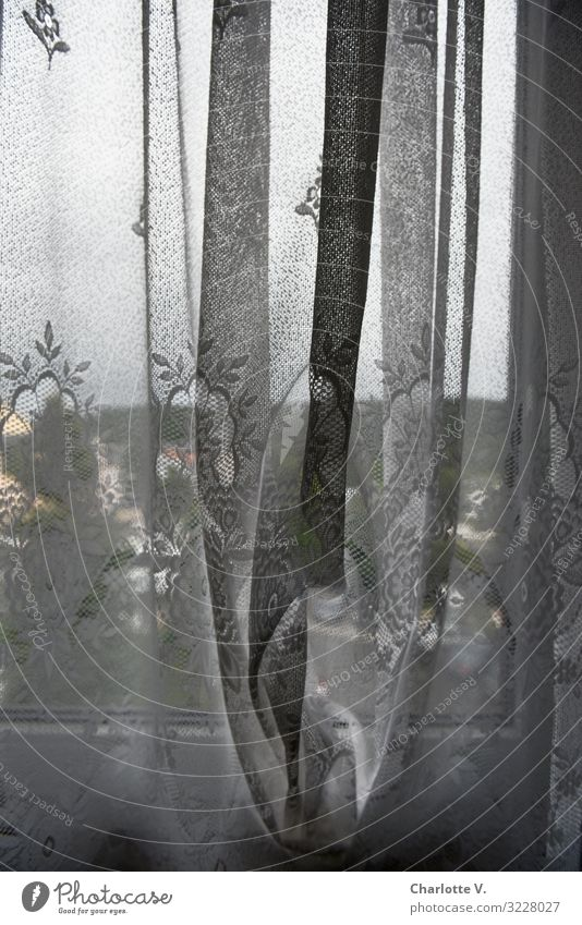 Behind German curtains | view out of the window through a transparent curtain. Living or residing Interior design Decoration Village Window Curtain Cloth Drape