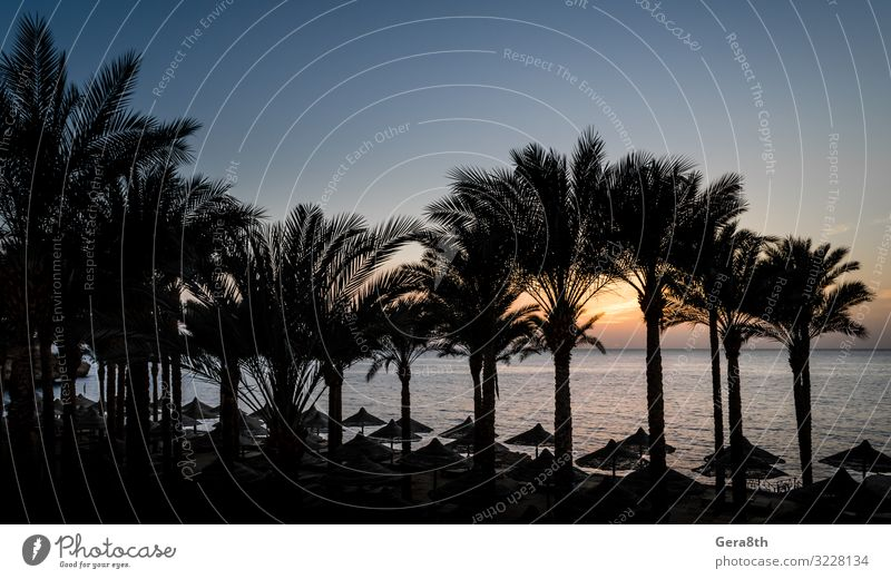 evening sunset landscape in Egypt Relaxation Vacation & Travel Summer Sun Beach Ocean Waves Fingers Nature Landscape Plant Clouds Climate Tree Virgin forest