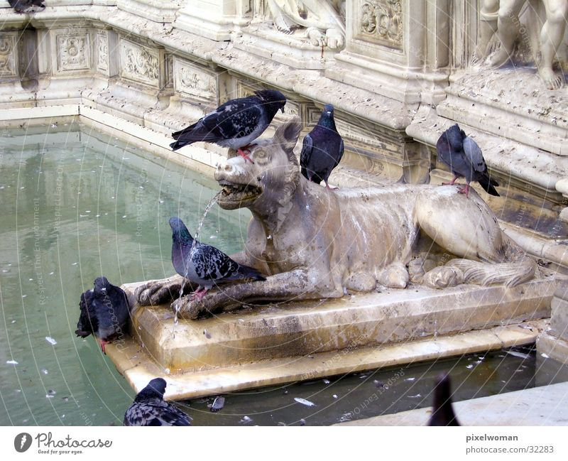 wolf Wolf Italy Sculpture Animal Architecture