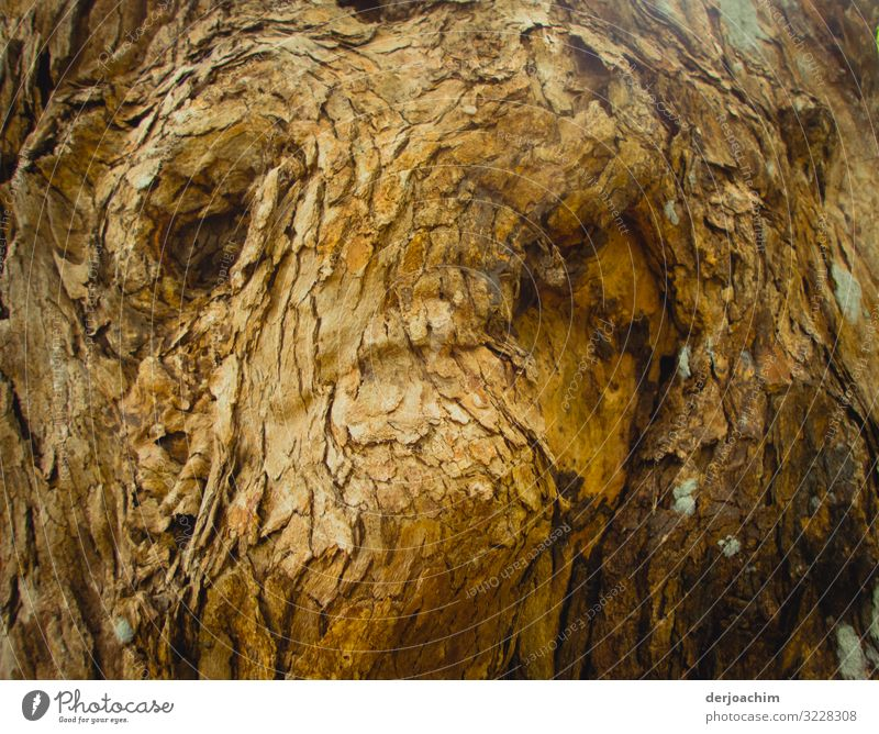 Tree face. Amazing structure in a tree. Joy Contentment Trip Summer Nature Beautiful weather Virgin forest Queensland Australia Deserted Facial expression Wood