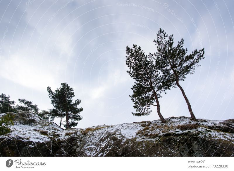a little snow Winter Snow Mountain Nature Landscape Sky Clouds Tree Rock Teufelsmauer Cold Blue Brown Gray Green Harz Snowfall Wind cripple Pine