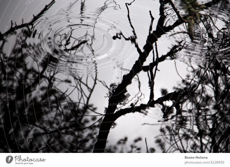 Light and shadow: Water circles in the shade of trees Shadow black-white reflection branches Exterior shot Reflection Environment Deserted Landscape Calm Autumn