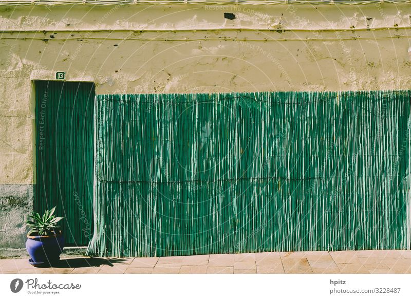 13 Wall (barrier) Wall (building) Facade Ornament Line Yellow Green Warm-heartedness Calm Colour photo Exterior shot Deserted Copy Space top Evening