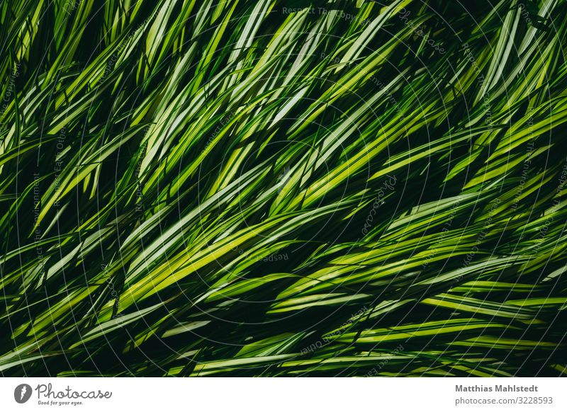 flow Environment Nature Plant Summer Leaf Grass Garden Park Movement Growth Natural Green Equal Colour photo Multicoloured Exterior shot Detail Deserted