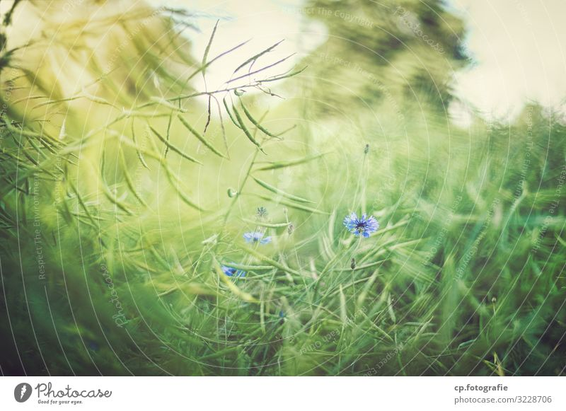 Nature Summer Plant Blue Green Blossom Natural Beautiful weather