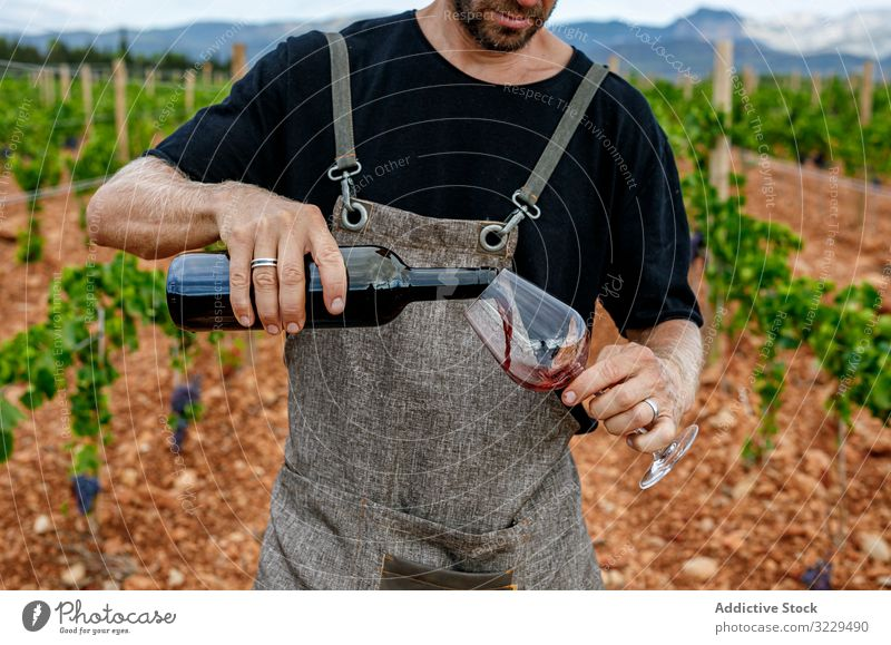 Male filling glass with wine on valley man vineyard pour male work wear nature winery drink viticulture agriculture lifestyle summer grape countryside standing