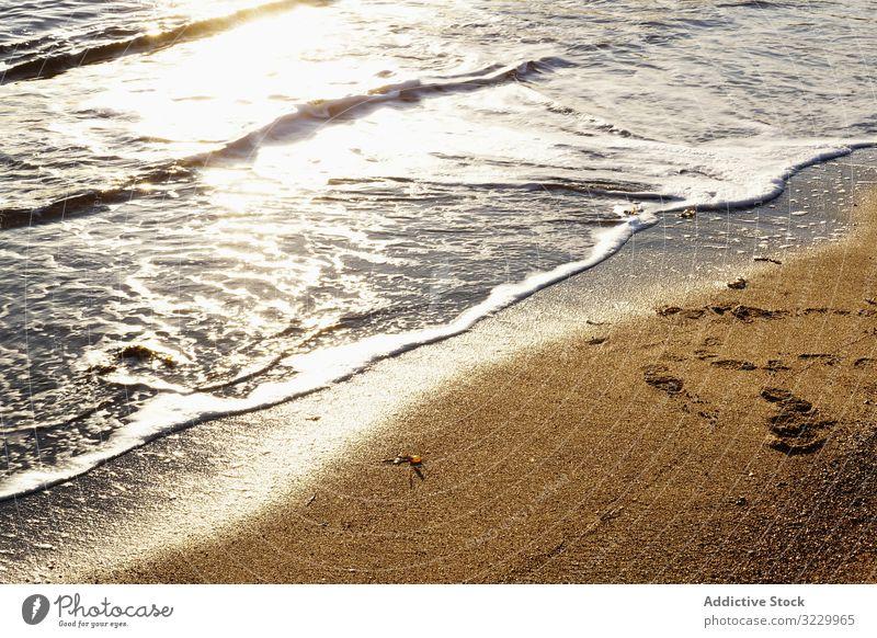 wet sandy shore on sunny day in beach daytime nature algae natural ground coast surface shoreline season nobody plant aquatic calm tranquil serene peaceful pile