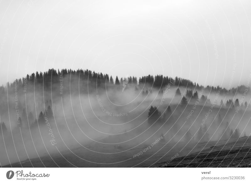 When the fog comes Nature Autumn Fog Forest Hill Alps Observe Discover Relaxation Going Hang Looking Dream Cold Gray Moody Caution Serene Authentic Loneliness