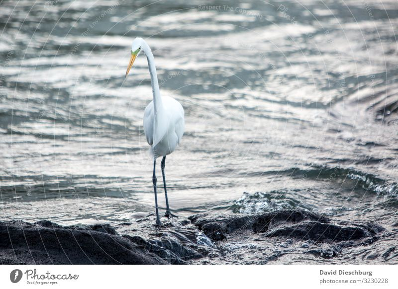 Vacation & Travel Nature Water White Landscape Animal Black Bird Waves Stand Adventure Feather Observe Fish River Brook