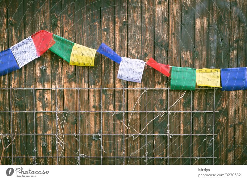 Buddhist flags Wall (barrier) Wall (building) Wooden wall Prayer flags Buddhism Sign Authentic Free Friendliness Positive Blue Brown Yellow Green Red White