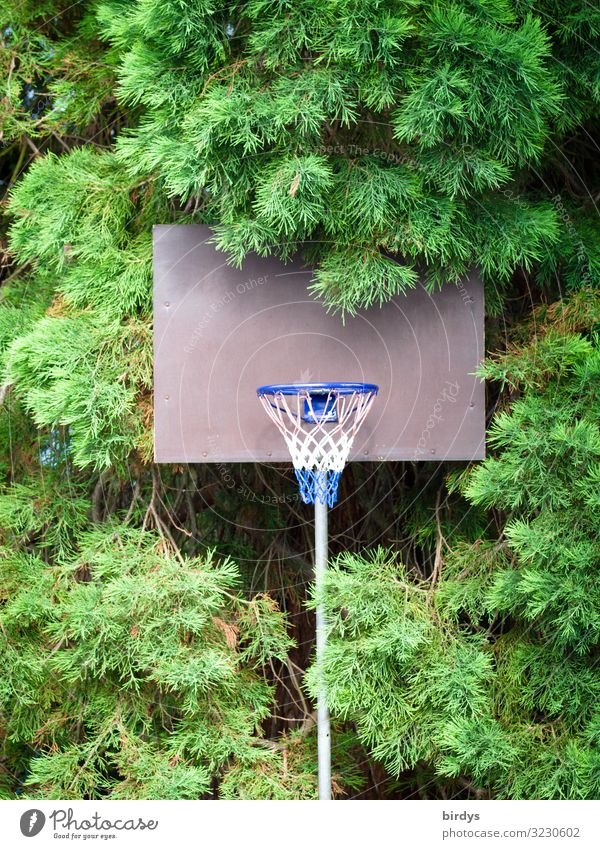 Basketball in the green Leisure and hobbies Playing Sports Basketball basket Summer Tree Authentic Natural Positive Athletic Blue Gray Green White Anticipation