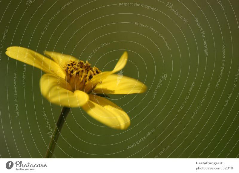 Beautiful Flower Green Plant Yellow Blossom Near