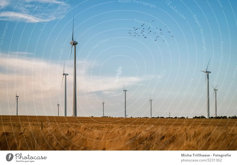 Windmills and cornfields Agriculture Forestry Energy industry Technology Advancement Future Renewable energy Wind energy plant Nature Landscape Sky Clouds