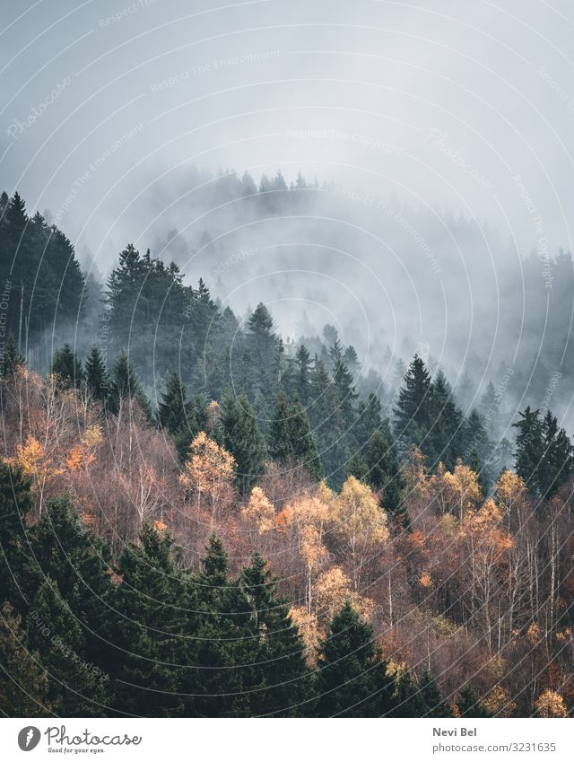 Foggy morning in the Harz Mountains Leisure and hobbies Vacation & Travel Tourism Trip Adventure Hiking Environment Nature Landscape Plant Clouds Storm clouds